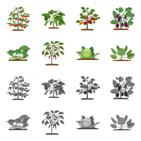 Isolated object of greenhouse and plant sign. Collection of greenhouse and garden vector icon for stock. Zdjęcie Seryjne - 113609103
