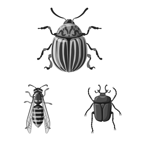 Vector design of insect and fly symbol. Collection of insect and element stock symbol for web.