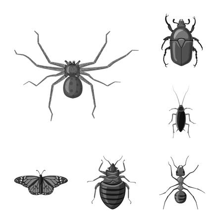 Vektordesign des Insekten- und Fliegenlogos. Sammlung von Insekten- und Elementvorratvektorillustration.