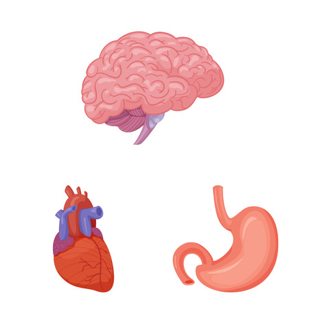 Vector illustration of body and human symbol. Collection of body and medical stock symbol for web. Vector Illustration