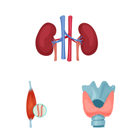 Vector design of body and human icon. Collection of body and medical stock symbol for web.