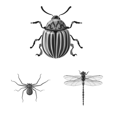 Vector illustration of insect and fly logo. Collection of insect and element stock vector illustration.