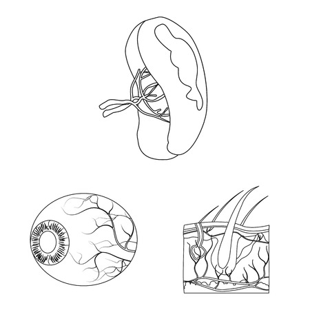 Isolated object of body and human icon. Set of body and medical vector icon for stock.