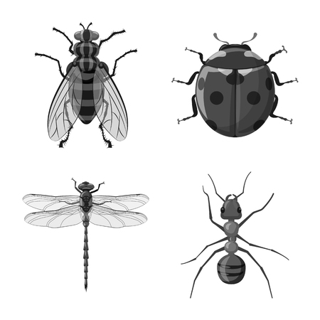 Isolated object of insect and fly symbol. Set of insect and element vector icon for stock. Stock fotó - 114371675