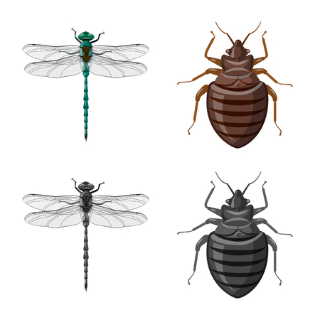 Vector design of insect and fly logo. Set of insect and element stock vector illustration. 向量圖像