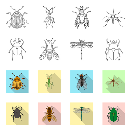 Isolated object of insect and fly symbol. Collection of insect and element stock vector illustration. Illustration