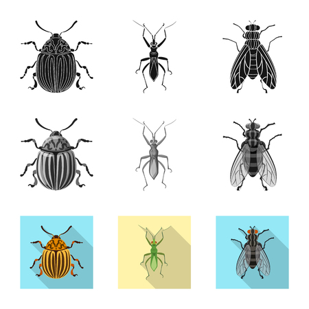 Vector illustration of insect and fly sign. Collection of insect and element stock vector illustration. Banque d'images - 114403588