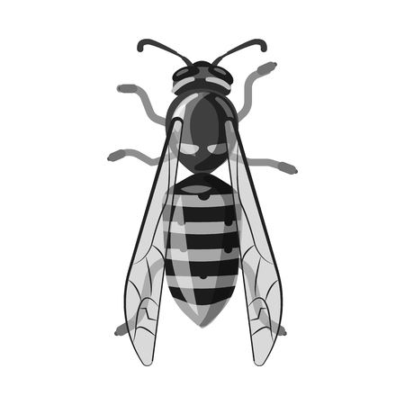 Vector illustration of insect and fly sign. Collection of insect and element stock vector illustration. Illusztráció
