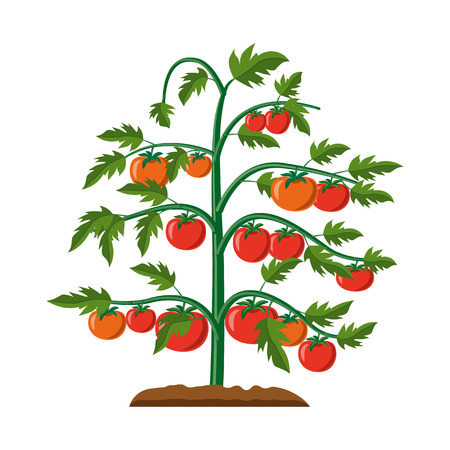 Vector illustration of greenhouse and plant logo. Set of greenhouse and garden stock symbol for web. Logo