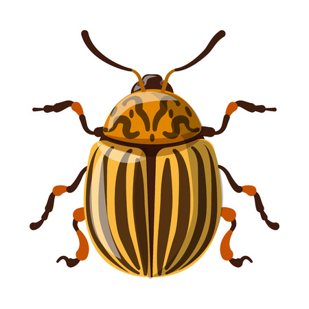 Isolated object of insect and fly symbol. Collection of insect and element stock vector illustration. Banque d'images - 115636221