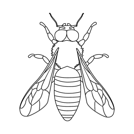 Vector design of insect and fly icon. Collection of insect and element vector icon for stock. Vetores