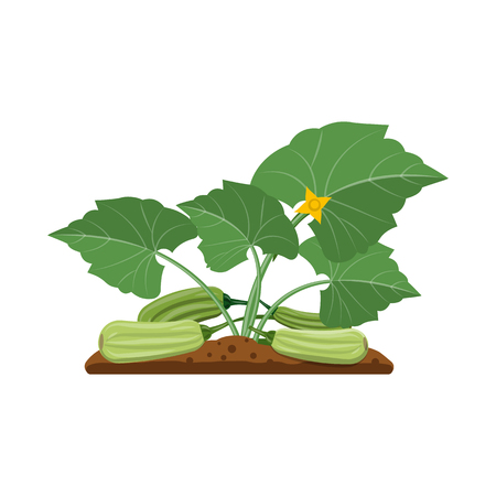 Isolated object of greenhouse and plant icon. Set of greenhouse and garden stock vector illustration. Ilustracja