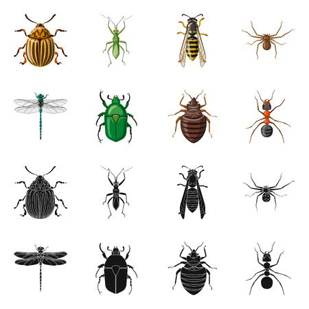 Isolated object of insect and fly symbol. Collection of insect and element vector icon for stock. Banque d'images - 116102029