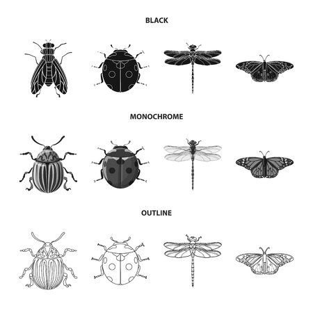 Vector illustration of insect and fly symbol. Set of insect and element stock symbol for web.