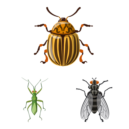 Isolated object of insect and fly sign. Set of insect and element vector icon for stock. Banque d'images - 116738610