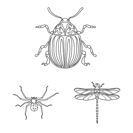 Vector illustration of insect and fly sign. Collection of insect and element stock vector illustration. Illustration