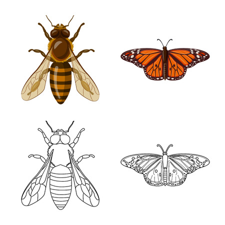 Isolated object of insect and fly logo. Collection of insect and element stock vector illustration. Logo