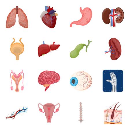 Vektor-Illustration von Körper und Mensch. Sammlung von Körper- und medizinischen Aktiensymbolen für das Web.