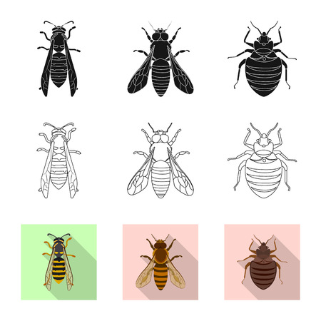 Isolated object of insect and fly sign. Collection of insect and element vector icon for stock. Vetores