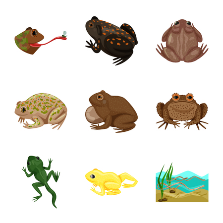 Vector design of frog and anuran logo. Collection of frog and animal stock vector illustration.