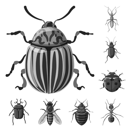Vector illustration of insect and fly sign. Set of insect and element vector icon for stock.