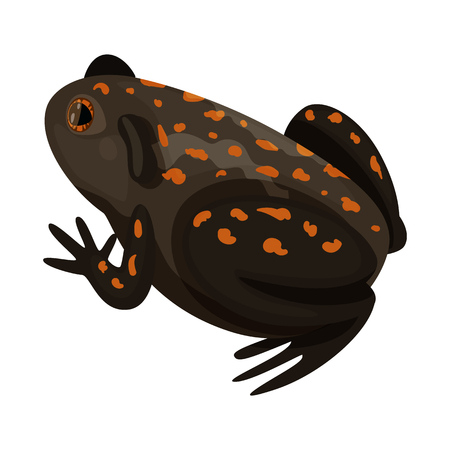 Vector design of toad and tropical icon. Collection of toad and ecology stock symbol for web.