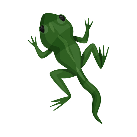 Vector design of toad and green icon. Set of toad and toxic vector icon for stock.