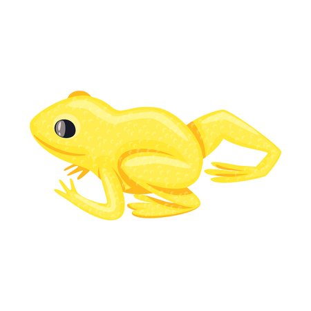 Vector design of toad and yellow symbol. Set of toad and rainforest stock symbol for web. Illustration