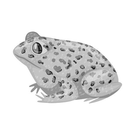 Vector design of toad and tropical sign. Collection of toad and points stock vector illustration.