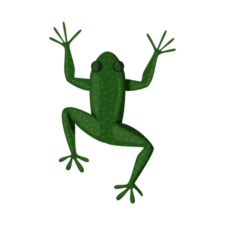 Isolated object of toad and green icon. Collection of toad and toxic vector icon for stock.