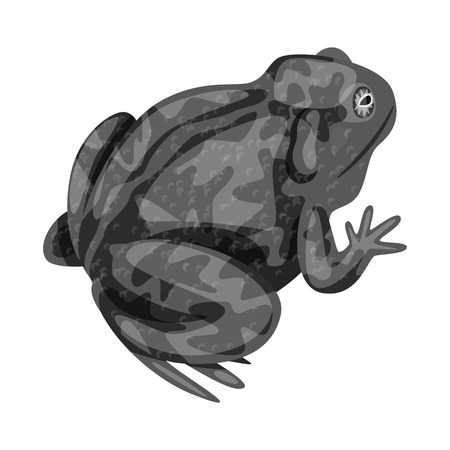 Vector illustration of toad and biology sign. Collection of toad and tropical stock vector illustration.