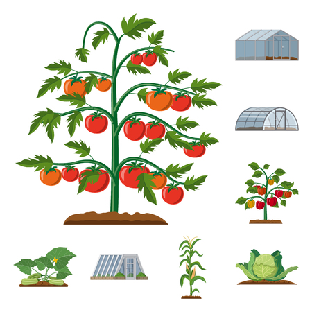 Vector illustration of greenhouse and plant logo. Set of greenhouse and garden stock symbol for web.  イラスト・ベクター素材