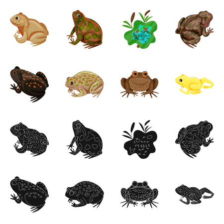 Isolated object of wildlife and bog logo. Set of wildlife and reptile vector icon for stock. Illustration