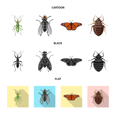 Vector design of insect and fly icon. Collection of insect and element stock vector illustration. Illustration