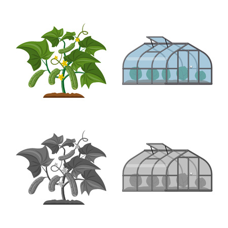 Isolated object of greenhouse and plant. Collection of greenhouse and garden stock symbol for web. Ilustração