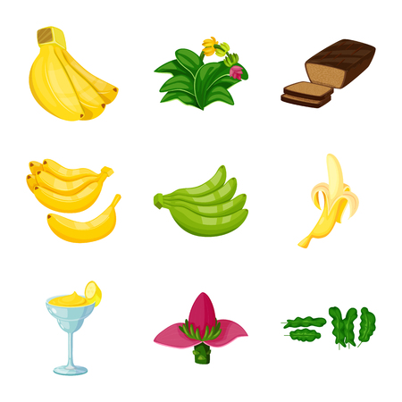 Isolated object of tropical and ripe symbol. Collection of tropical and potassium stock vector illustration. Vetores