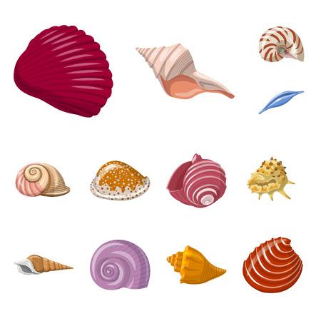 Vector illustration of seashell and mollusk icon. Set of seashell and seafood  vector icon for stock.