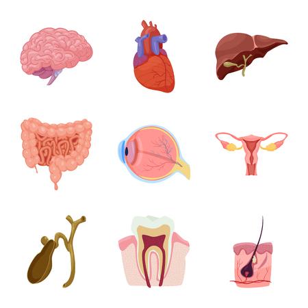 Vector illustration of body and human logo. Collection of body and medical stock vector illustration. Illustration