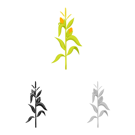 Vector illustration of corn and stalk icon. Set of corn and field stock vector illustration. Ilustração