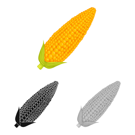 Isolated object of corn and sweetcorn symbol. Collection of corn and ripe stock vector illustration.