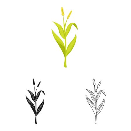 Vector illustration of sweet and corn. Set of sweet and botanical vector icon for stock.