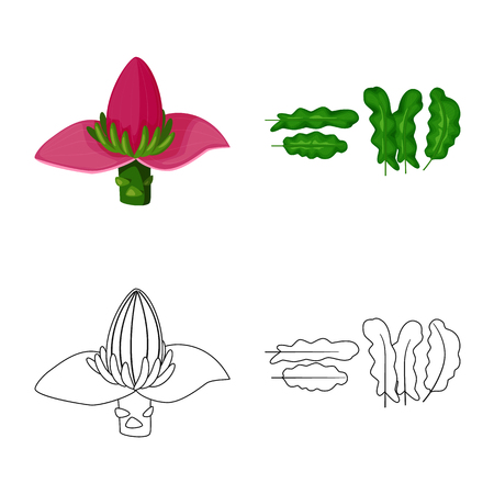 Vector illustration of natural and vegetarian icon. Set of natural and eating stock symbol for web.