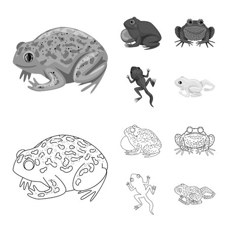 Vector illustration of wildlife and bog symbol. Collection of wildlife and reptile stock vector illustration.