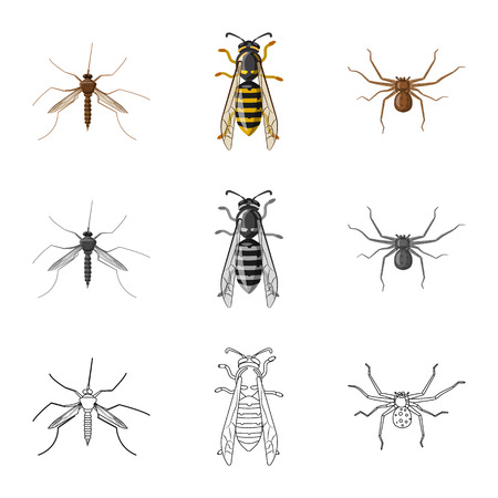 Isolated object of insect and fly symbol. Collection of insect and element vector icon for stock.
