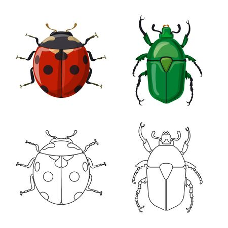 Isolated object of insect and fly logo. Set of insect and element stock symbol for web.  イラスト・ベクター素材
