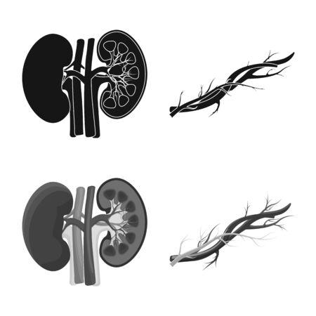 Isoliertes Objekt des Körpers und des menschlichen Zeichens. Set aus Körper und medizinischer Illustration Vektorgrafik