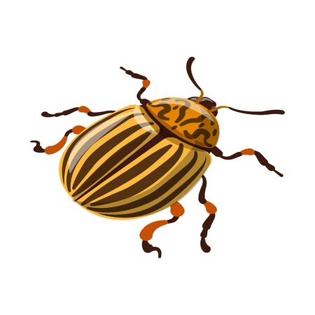 Isolated object of beetle and colorado icon. Set of beetle and striped stock symbol for web. Stock fotó - 126792145