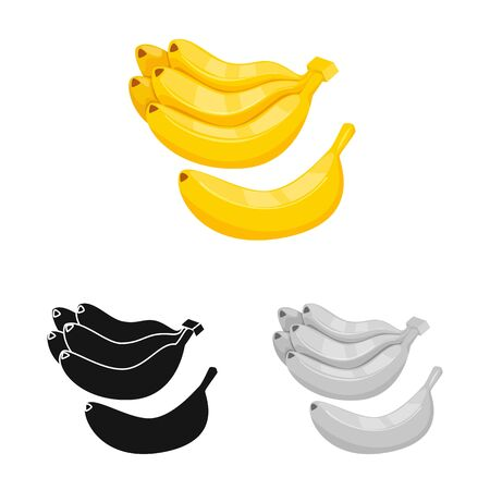 Vector design of banana and bunch. Set of banana and fruit stock symbol for web.