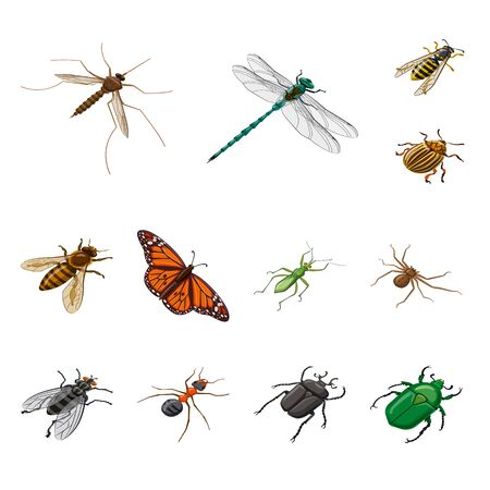 Isolated object of insect and fly. Collection of insect and entomology stock vector illustration.