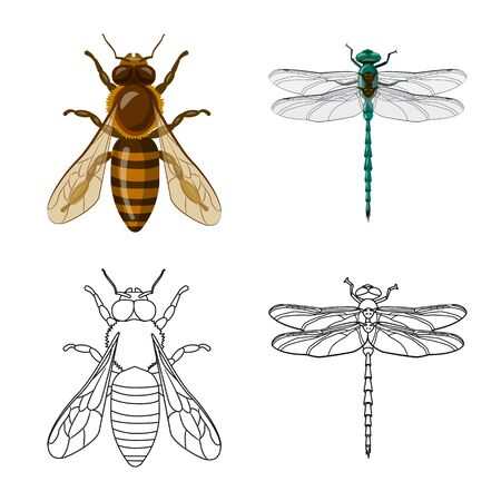 Isolated object of insect and fly. Collection of insect and element stock symbol for web. Vetores